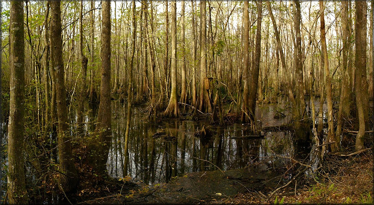 Crosby Sanctuary, Clay Co., Florida