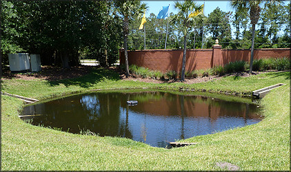 Small pond at Country Club Lakes Apartments with thriving Pomacea maculata population
