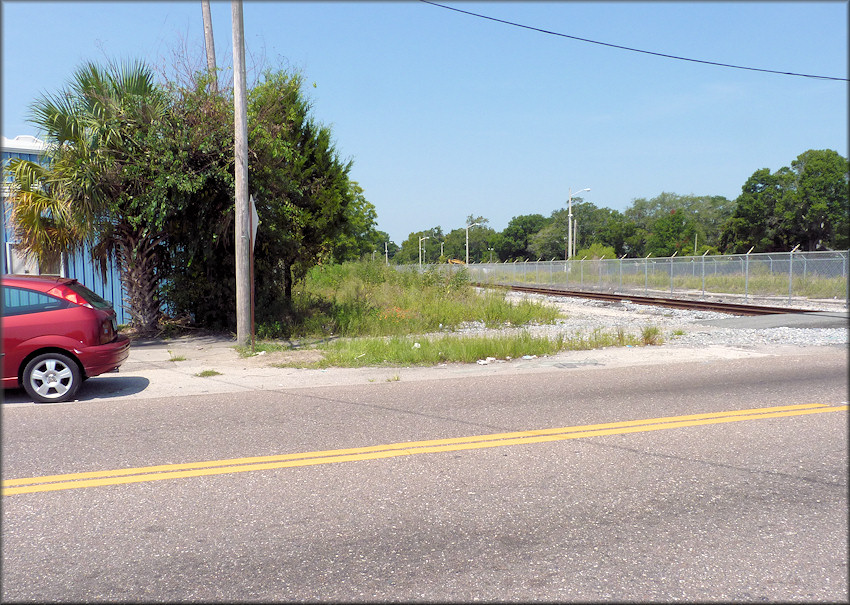 Bulimulus sporadicus (d'Orbigny, 1835) Habitat At The North Pearl Street Railroad Crossing (8/23/2014)